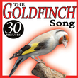 The Goldfinch Song Birds Sounds