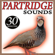 Partridge Sounds
