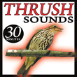 The Thrush Sound Birds Songs