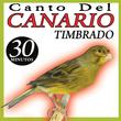 Canto de Canario Timbrado Español Sonido de Pajaros
