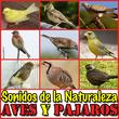 Sonidos de la Naturaleza. Aves y Pajaros