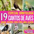 19 Cantos de Aves. Especial Ornitología. Canarios, Ruiseñor, Tordo, Perdíz, Mirlo, Jilguero