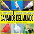 Canarios del Mundo. El Canto de 11 Razas de Canario. Ruso, Timbrado, Roller, Silvestre, Flauta, Malinois y Mas...